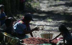 Entre lo urgente y lo importante… proteger como nunca antes a la niñez trabajadora